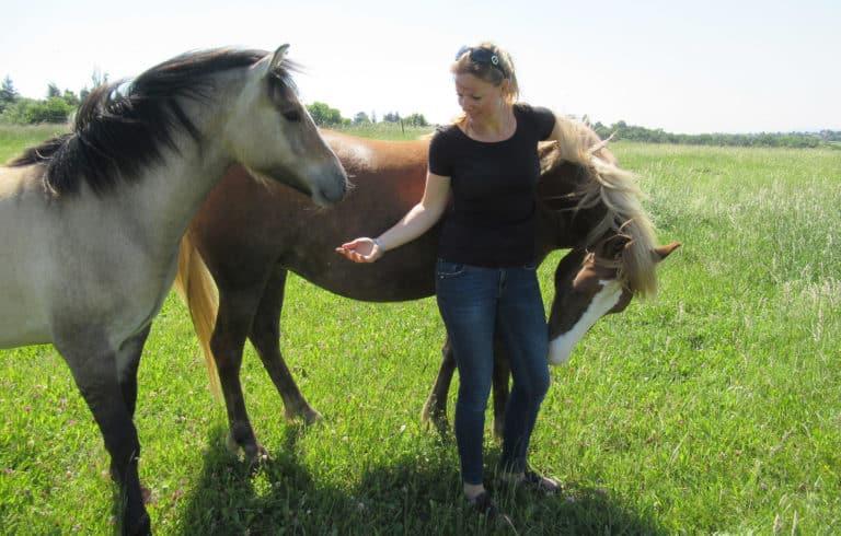 Les 3 manières de respecter son cheval