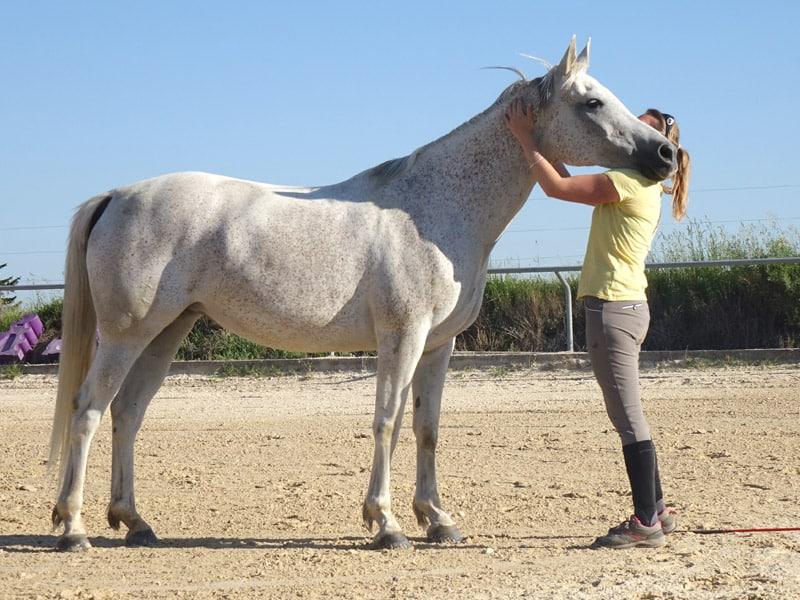 Méthode équitation éthologie près de Lyon