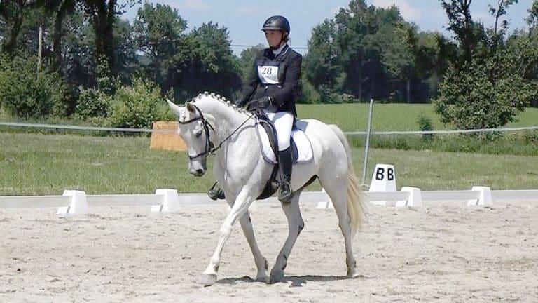 L'équitation éthologique indispensable à l'équitation classique