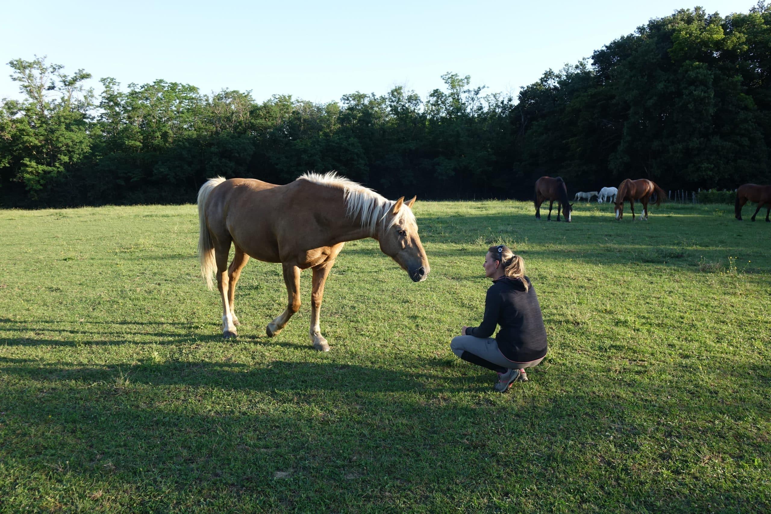 Les 4 signes que la relation avec votre cheval n'est pas optimale