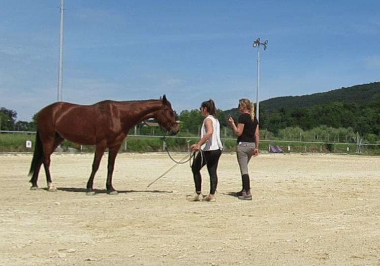 cours individuel equitation ethologique